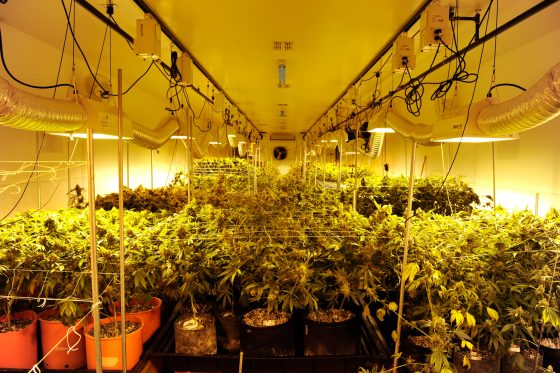 California's Cannabis Farms Under Scrutiny To Reduce Their Environmental Impact