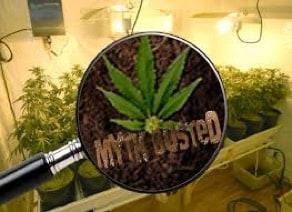 Cannabis Myths Busted 1