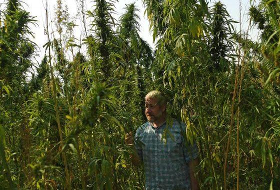 Hemp Power-players Lobby Congress To Shift Mind-set, Legalize Crop