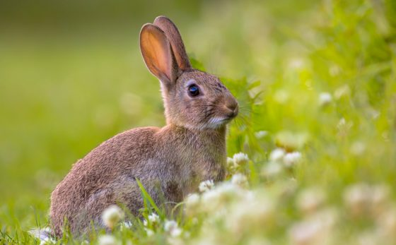 Soft On Crime? Candidate Advocates Use Of Drug-sniffing Bunnies