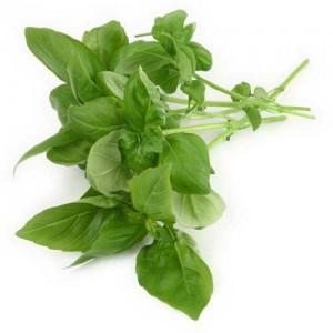 tulsi-leaf