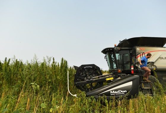 Wisconsin Considers Returning To Its Hemp Farming Powerhouse Roots